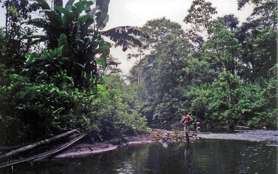 memories of a jungle jaunt