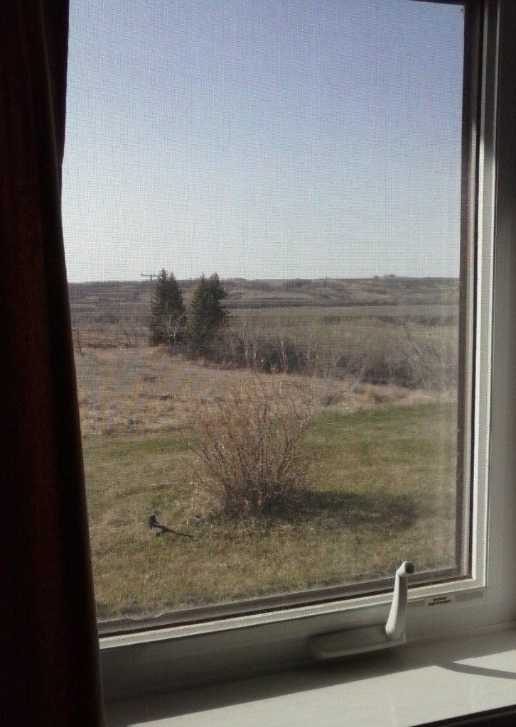 View from my room at Sage Hill Writing Experience