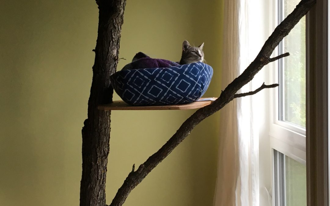 Touring and Cat Trees