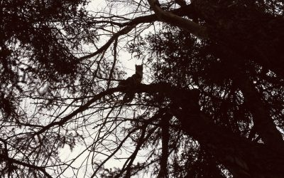 On Tree Climbing and Constraints