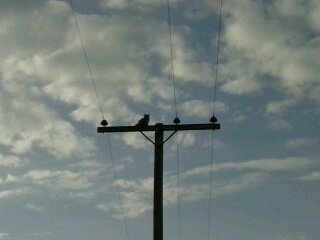 An owl at Sage Hill