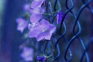 flowersandfence2